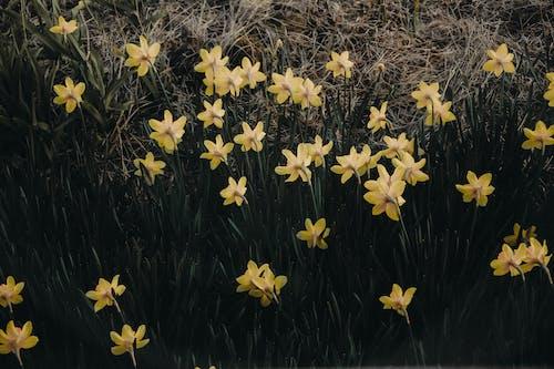 Darmowe zdjęcie z galerii z dziki, flora, kolor, kwiaty