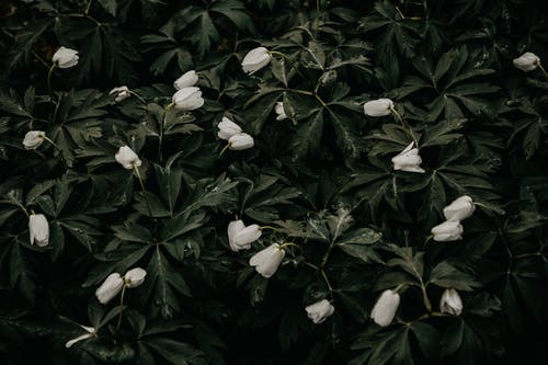 Photo of White Petaled Flowers