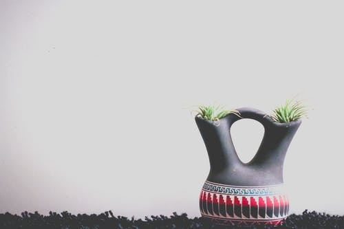Plants Inside A Pot