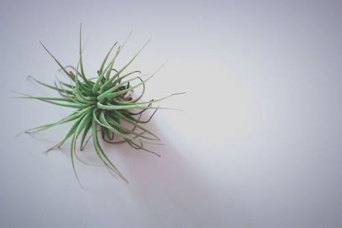 Ảnh lưu trữ miễn phí về màu xanh lá, thực vật