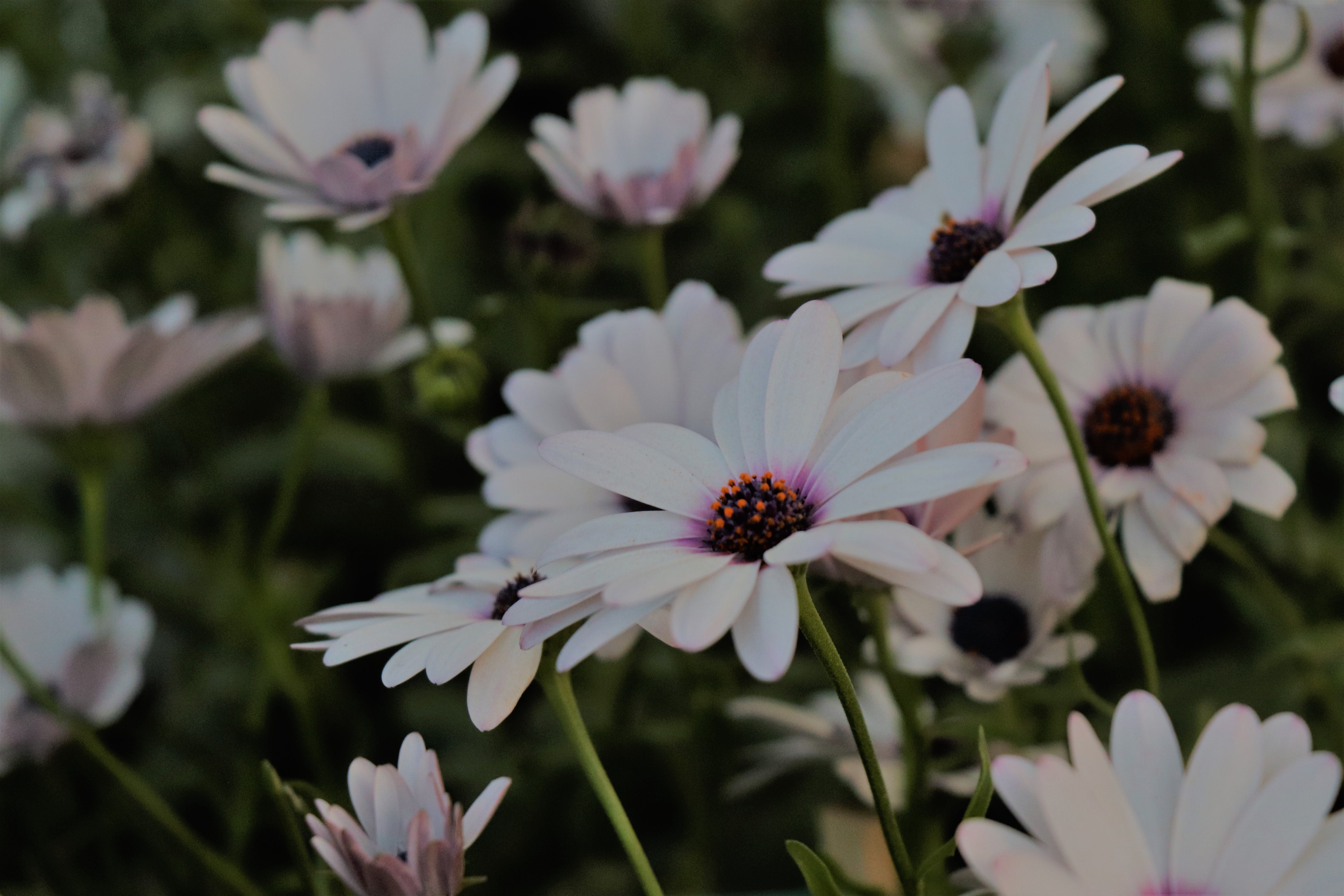 Free stock photo of blue flowers, bunch, bunch of flowers, floer