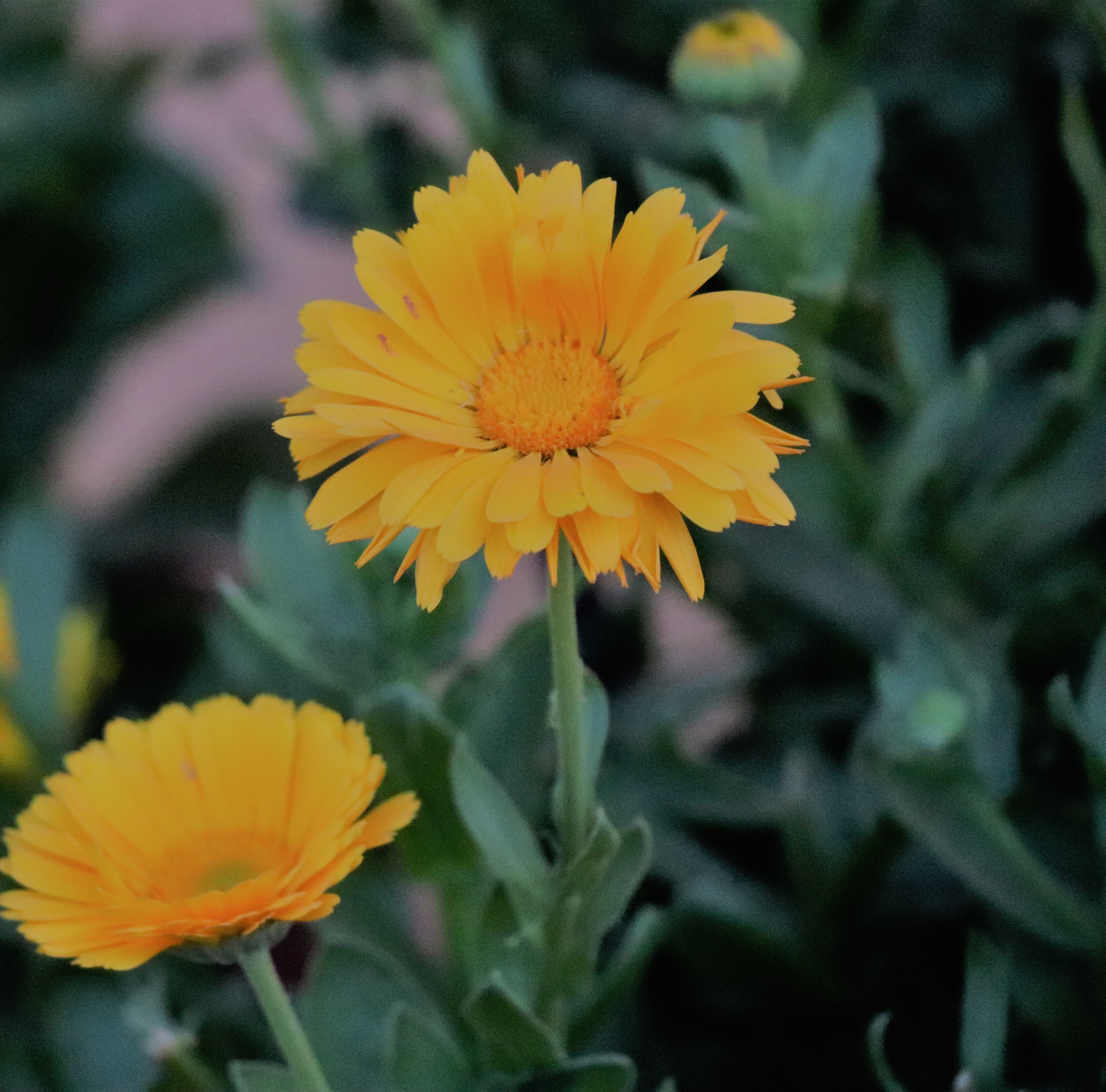 Yellow Petaled Flower