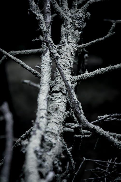 天性, 樹, 樹枝, 漆黑 的 免费素材照片