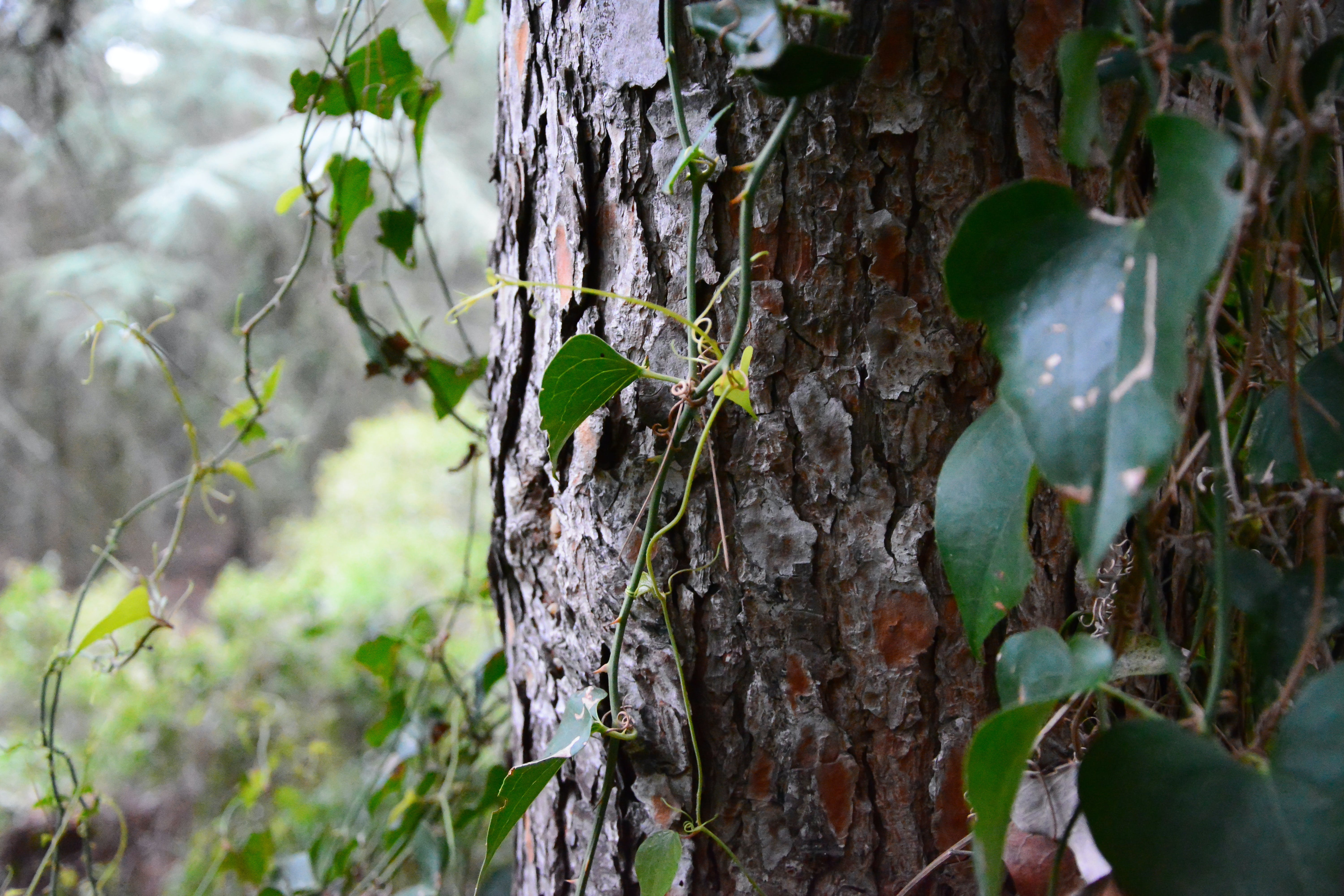 Free stock photo of green, leaves, nature, tree