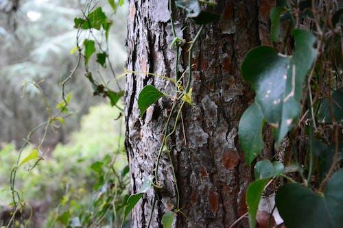 Free stock photo of green, nature, tree