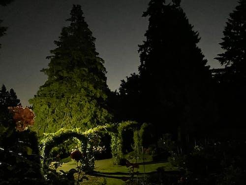 Free stock photo of city, city at night, nature
