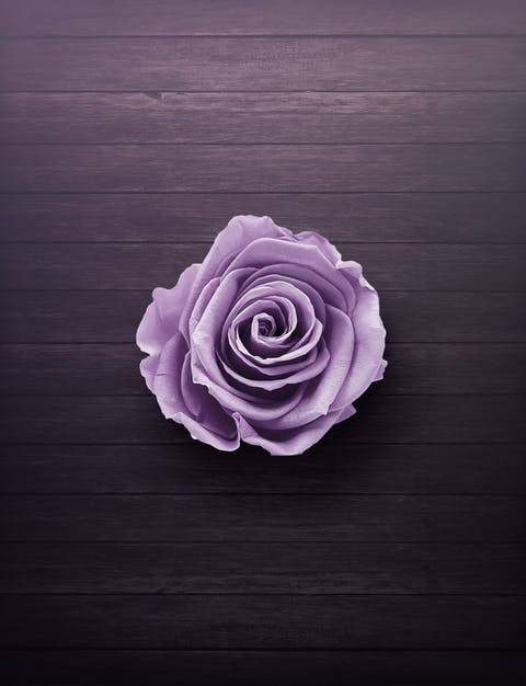 Purple Rose On Wooden Surface