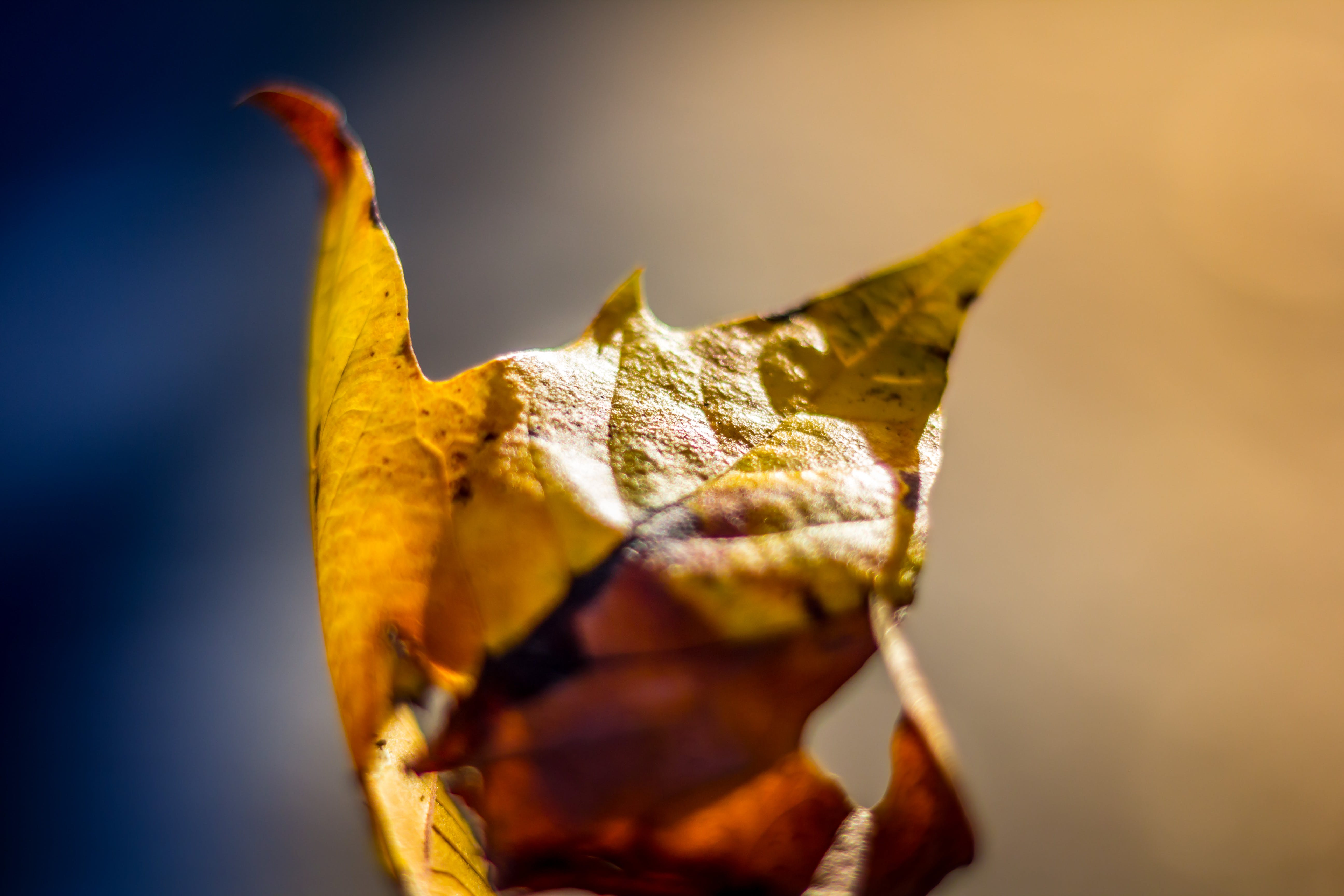 Focus Photography of Brown Leaf