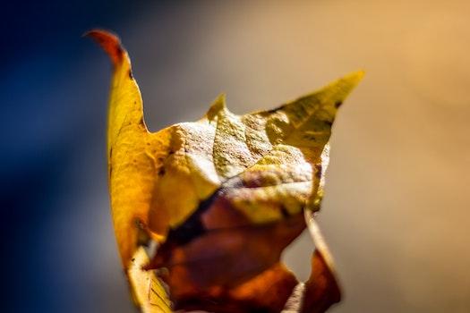 Free stock photo of yellow, leaf, autumn, fall