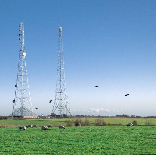 çanak anten, çim, çimen, enerji içeren Ücretsiz stok fotoğraf