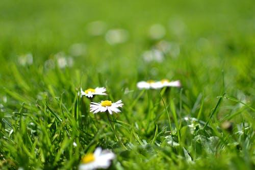 Imagine de stoc gratuită din floră, flori, gazon, iarbă