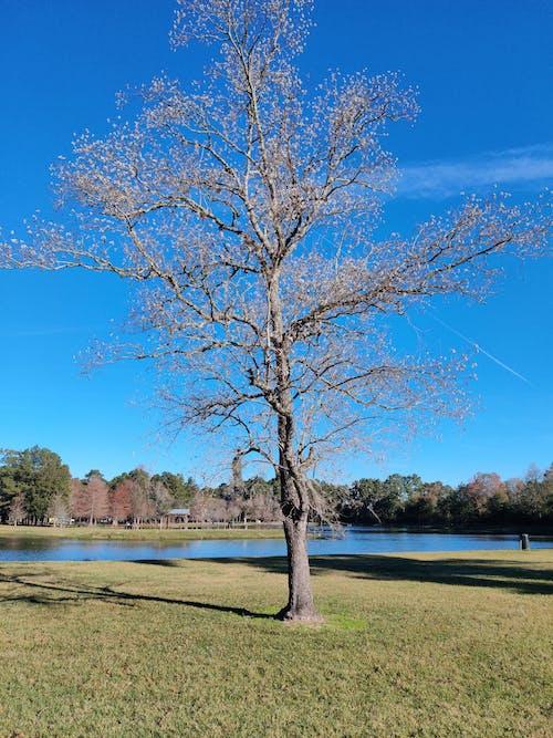 A Brown Tree Near the lake