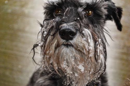 Fotos de stock gratuitas de adorable, animal, animal domestico, cabello