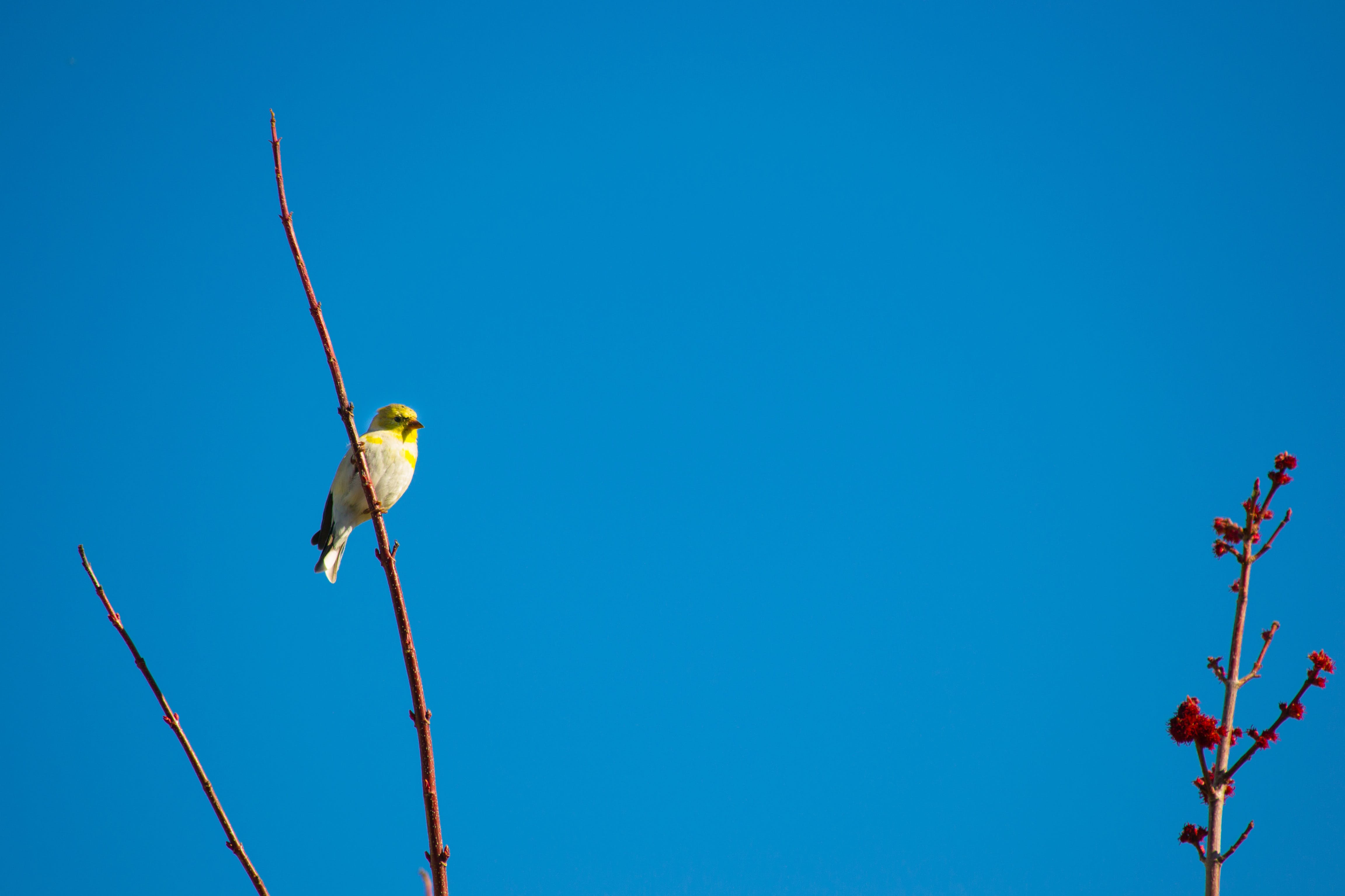 Gratis lagerfoto af blå himmel, dyr, gren, lille