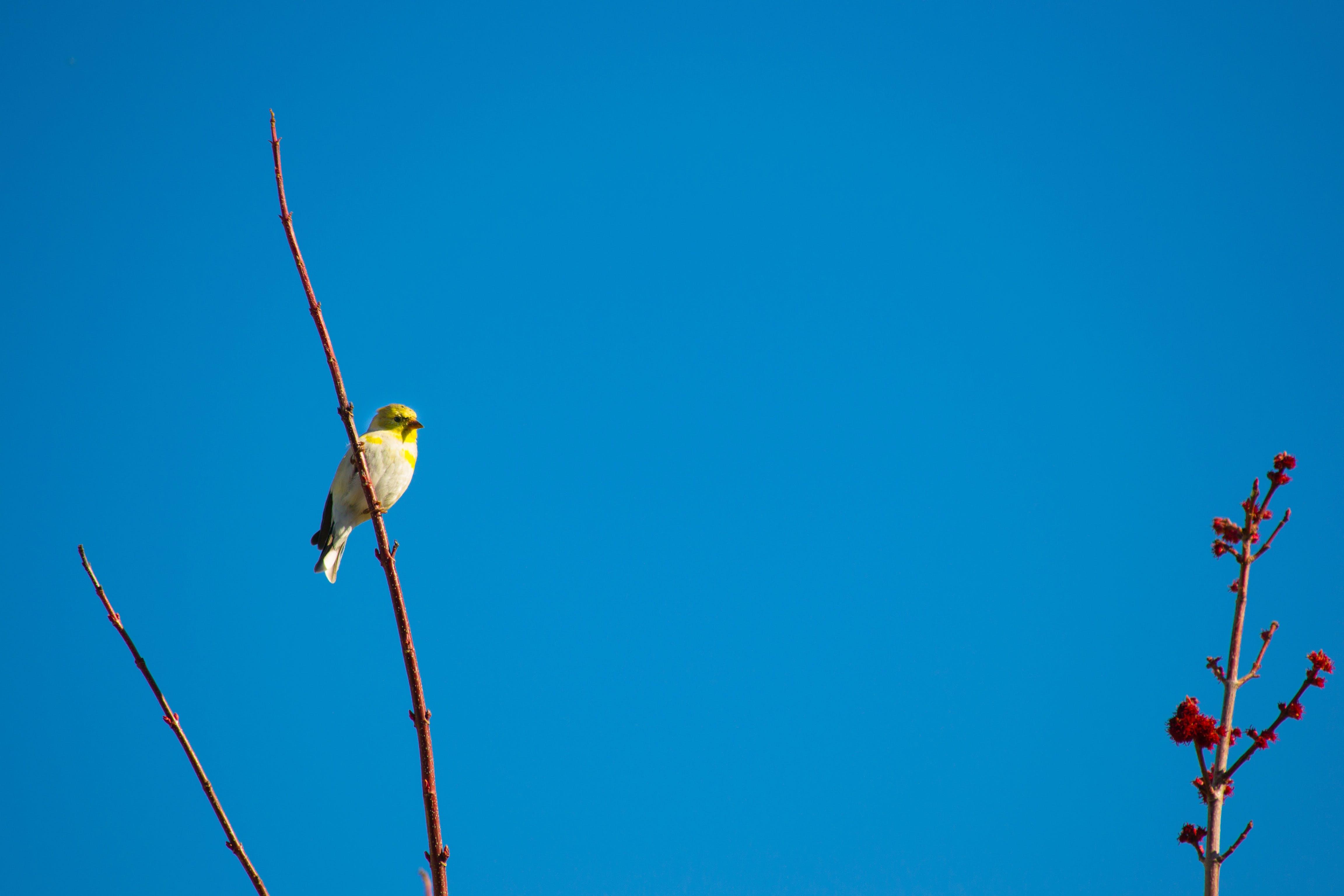Bird Perched