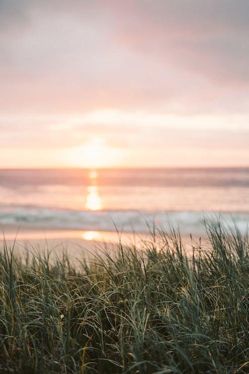 Gratis arkivbilde med bølger, bryte bølger, daggry