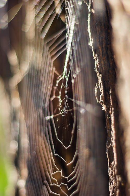 Kostenloses Stock Foto zu spinne, spinnennetz, spinngewebe