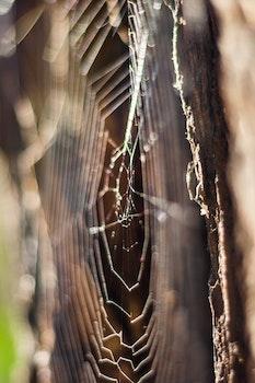 Royalty free images of spider, spider's web, spiderweb, spider web
