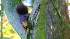 animal, tree, close up