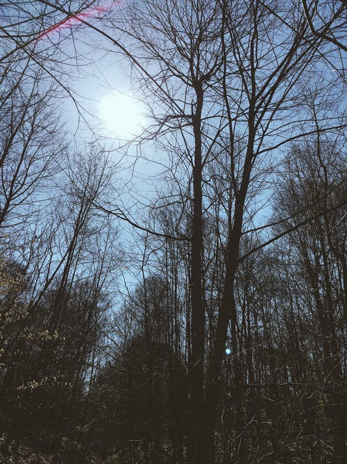 Free stock photo of Nicolas DeSarno, skyline, trees