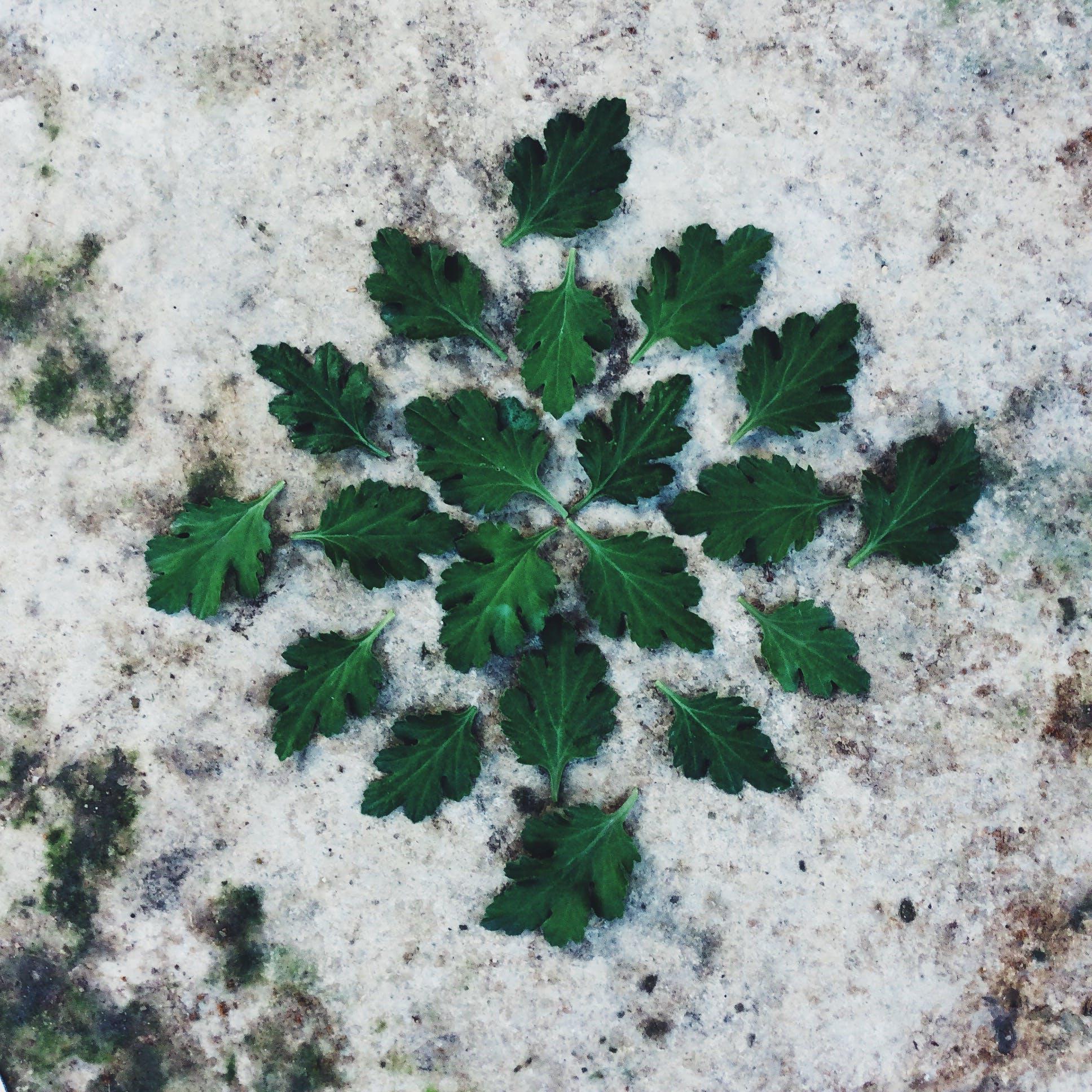 Δωρεάν στοκ φωτογραφιών με rock, πράσινο φύλλο, πράσινος