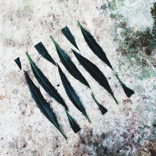Základová fotografie zdarma na téma zelená, zelený list