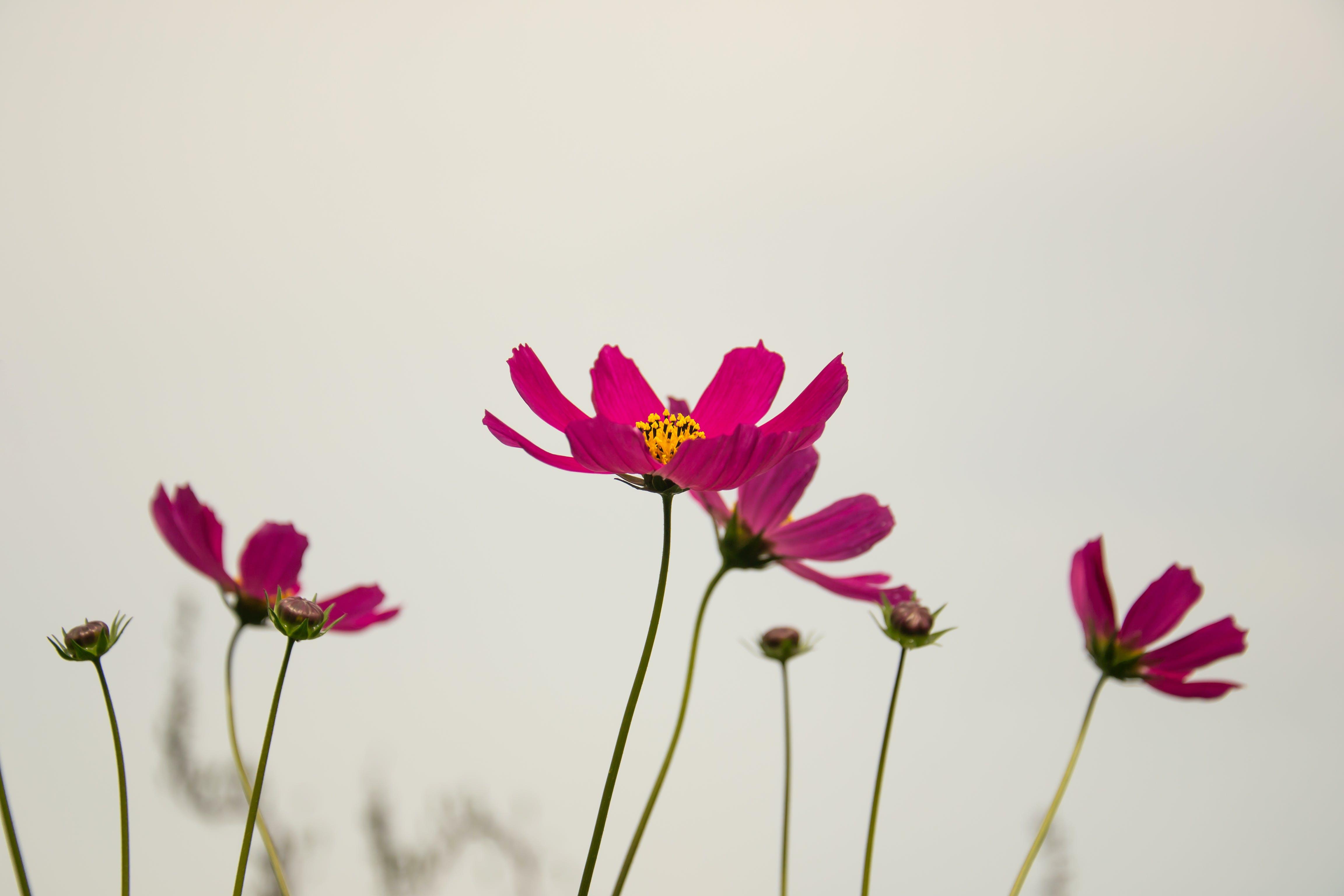 Gratis stockfoto met bloeien, bloemblaadje, bloemen, bloesem