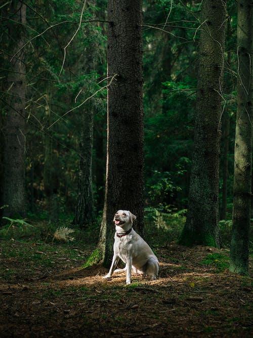 動物, 天性, 寵物, 拉布拉多犬 的 免費圖庫相片