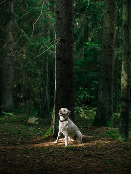 Free stock photo of nature, forest, trees, animal