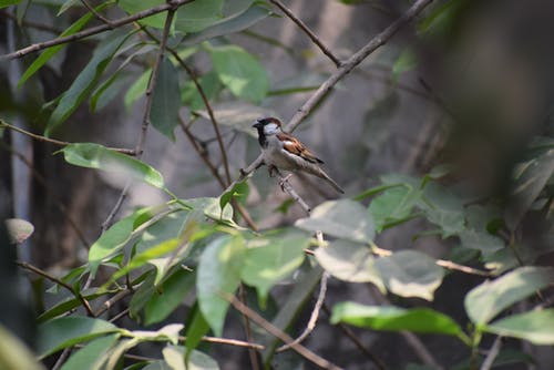 Free stock photo of sparrow in my backyard