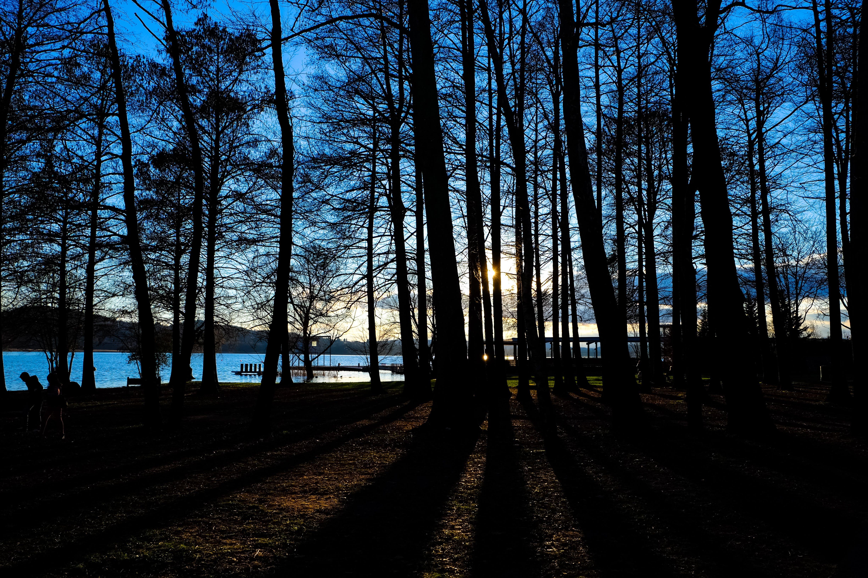de amanecer, arboles, bosque, cielo
