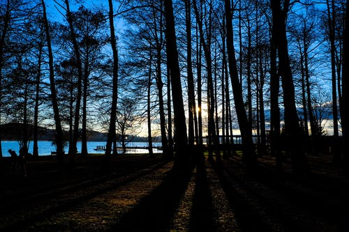 Silhouette of Woods Near Body of Water during Golden Hour Photography