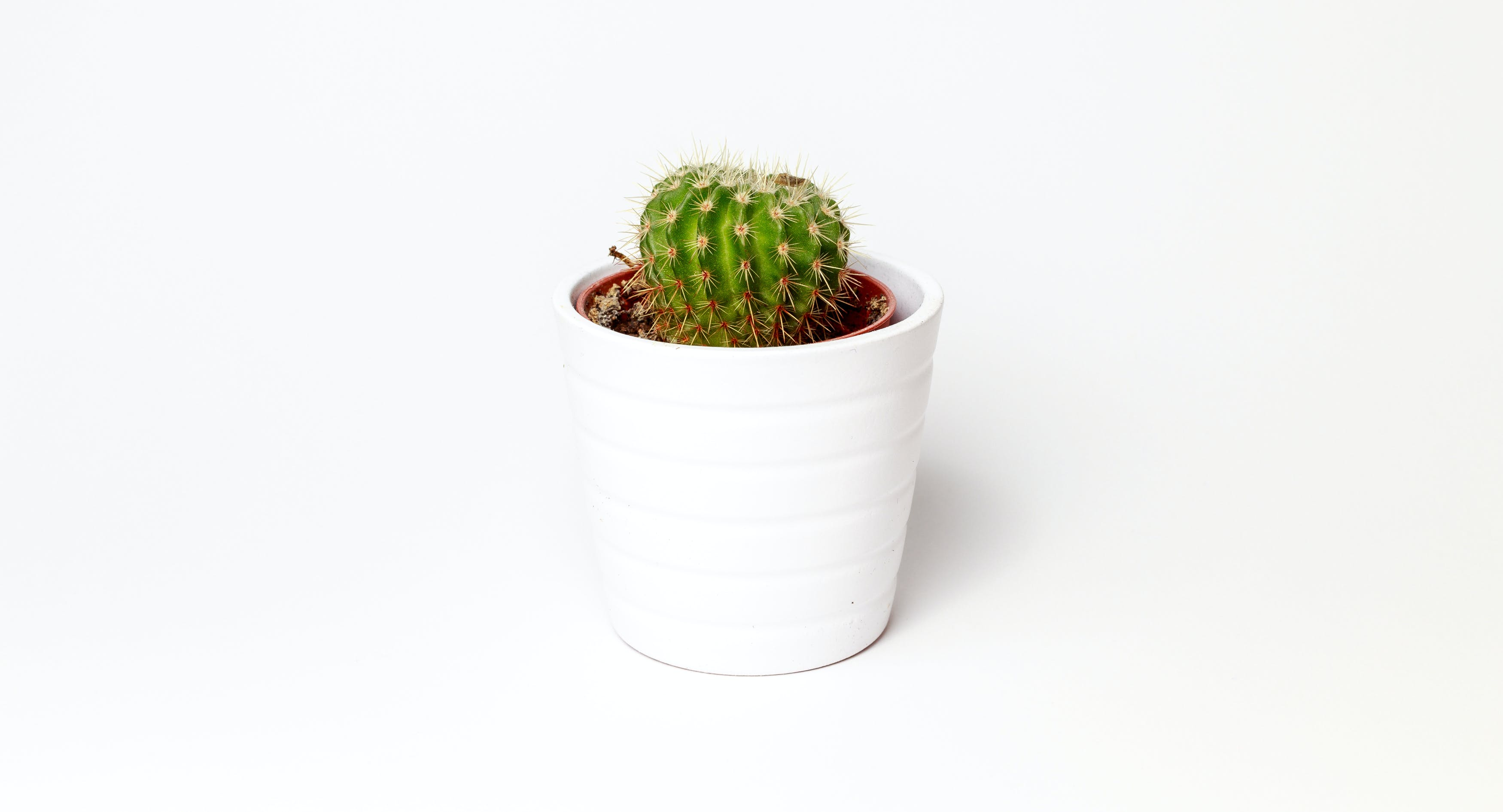 Green Cactus Potted Plant on White Ceramic Pot