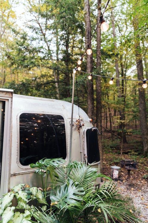 White Van in Forest