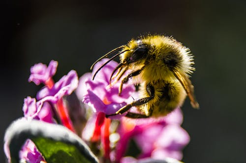 Close-up Photography of Yellow Bee Perching on Purple Petaled Flower