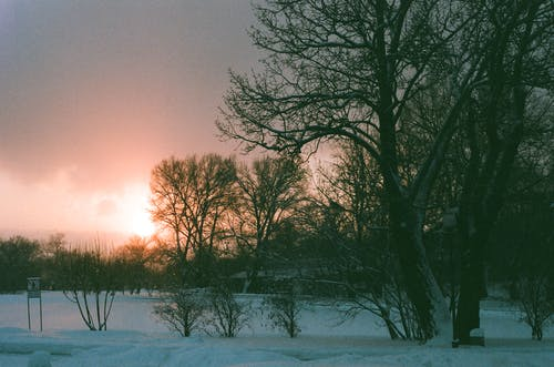 Безкоштовне стокове фото на тему «відділення, гілка, галузь, дерево»