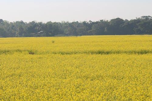 Foto d'estoc gratuïta de a pagès, Agricultura, arbres, camp