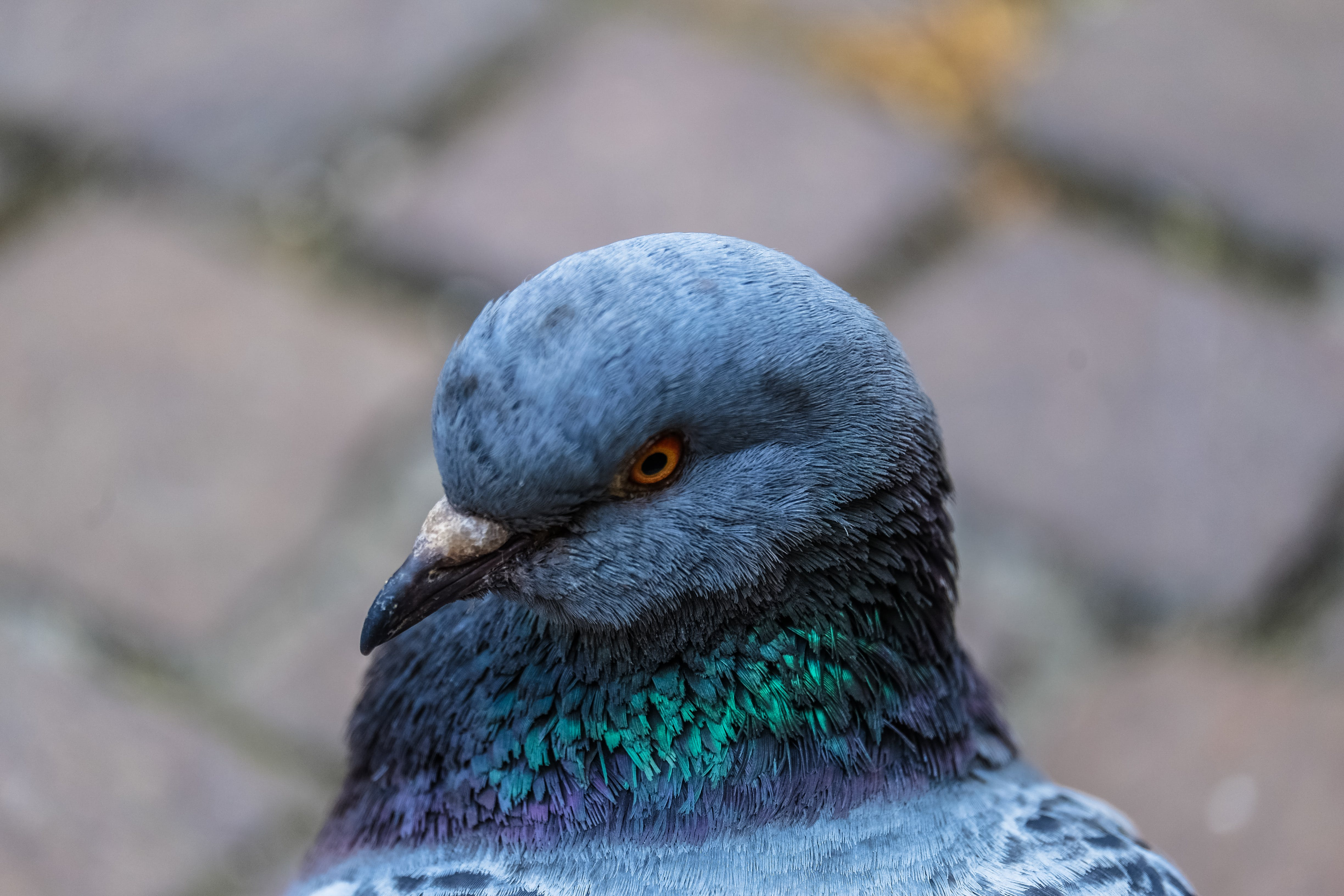 Grey Green Bird Close Up Photo