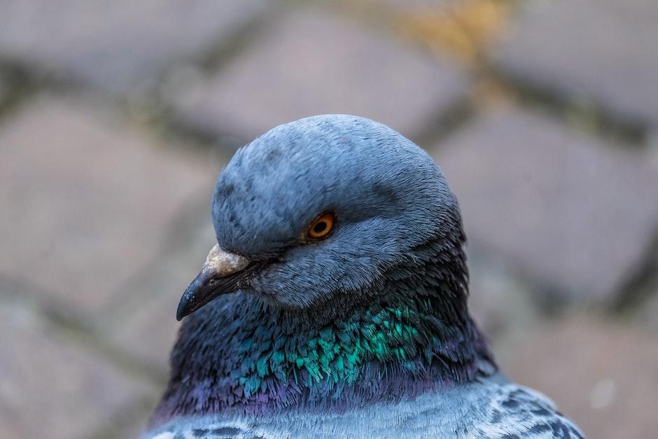 Grey Green Bird Close Up Photo