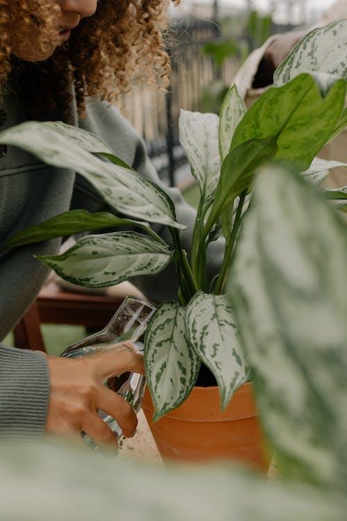 Бесплатное стоковое фото с выращивание, глиняный горшок, держать