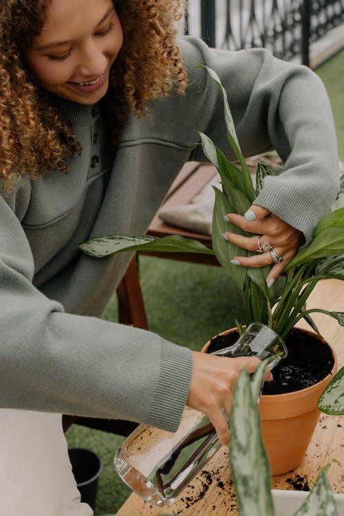 Бесплатное стоковое фото с выращивание, вьющиеся волосы, глиняный горшок