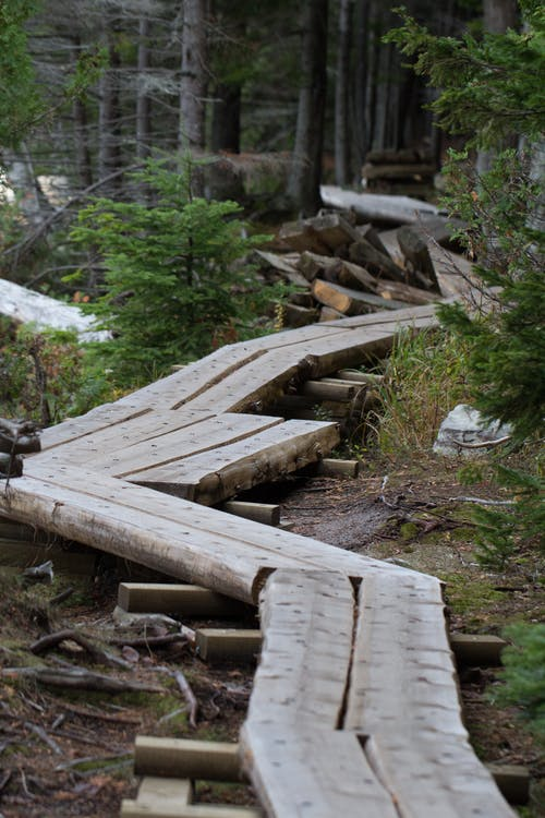 Empty Log Pathway Surrounded by Trees