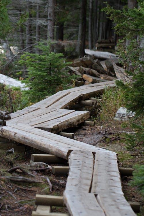 Gratis stockfoto met bomen, boomstam, Bos, bossen