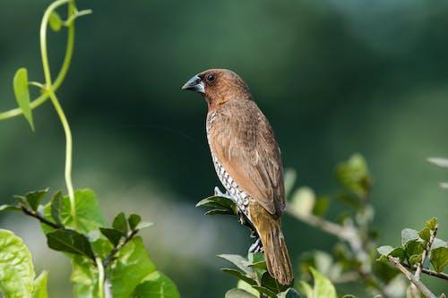 갈색과 회색 새의 근접 촬영 사진은 잎 식물에 자리 잡고