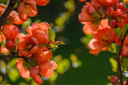 Darmowe zdjęcie z galerii z flora, kwiaty, kwitnąć, natura