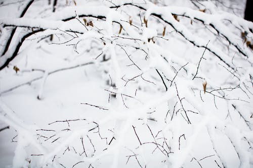 Kostnadsfri bild av gren, grenar, isig, kall