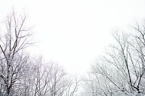 Kostnadsfri bild av dimma, isig, kall, molnig himmel