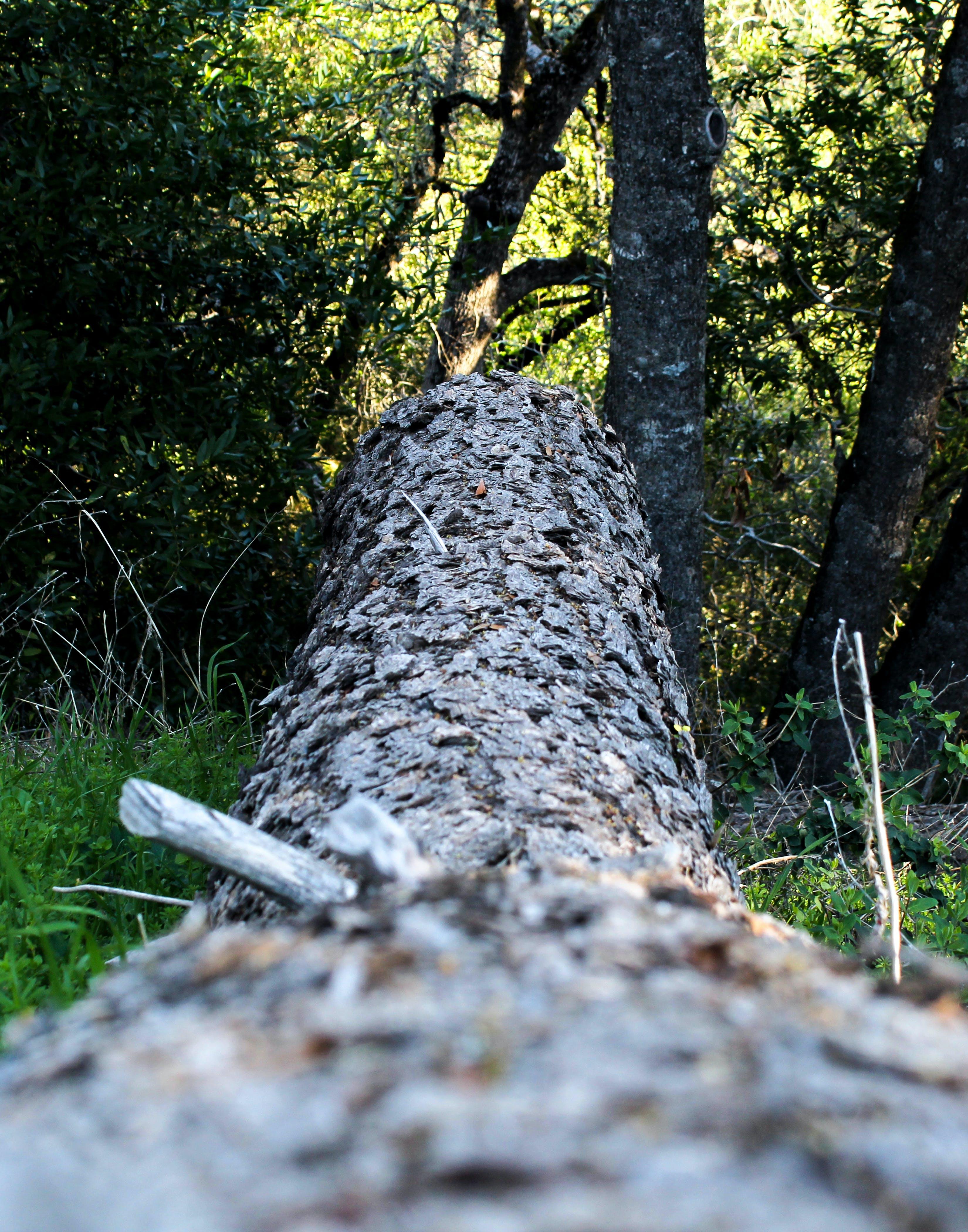 Free stock photo of fallen tree, tree