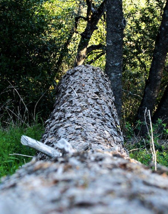 дерево, упавшее дерево
