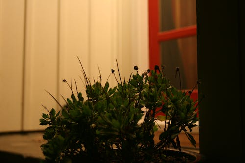 Free stock photo of door, night, plant, red door